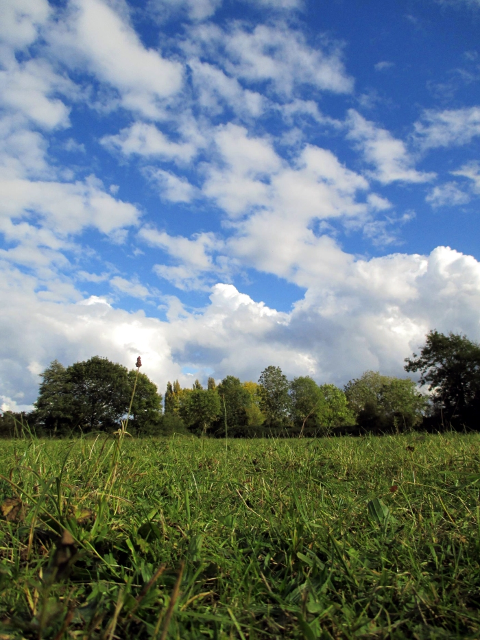 Grazing land across the Cherwell from University Parks